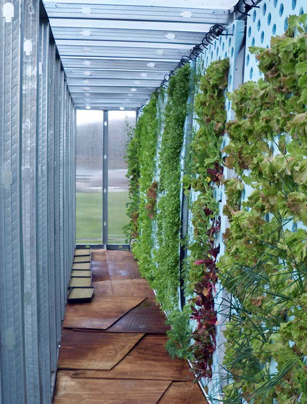 inside-greenhouse