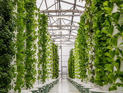 vertical-farming-1